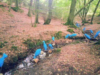 blaue-fische-im-waldbach